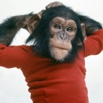 KAI'S TOP 5 MOVIES FEATURING PRIMATES